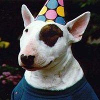 Dog Eat Dog парти на 1-ви май с безплатен билет за концерта